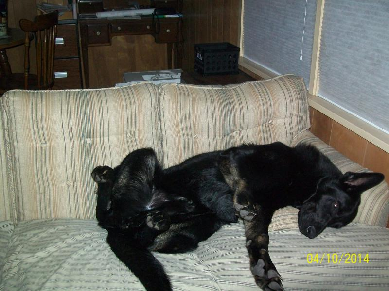 Let sleeping dogs lie-004.jpg