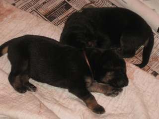 Ruby's Puppies are here!-023.jpg
