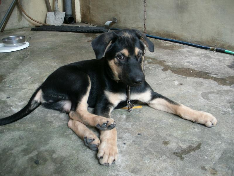 Is this really a gsd pup????-026.jpg