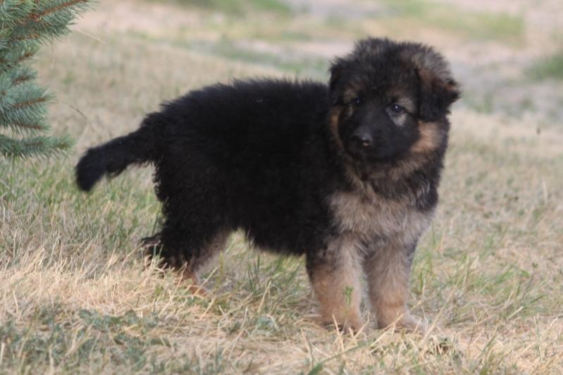 Show me your FLUFFY PUPPIES...-027.jpg