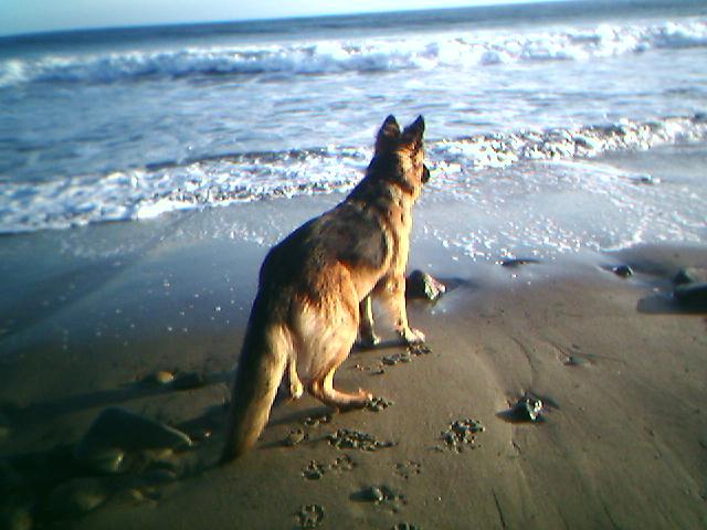 R.I.P. Dear Sasha-03-05-05_1705l.jpg