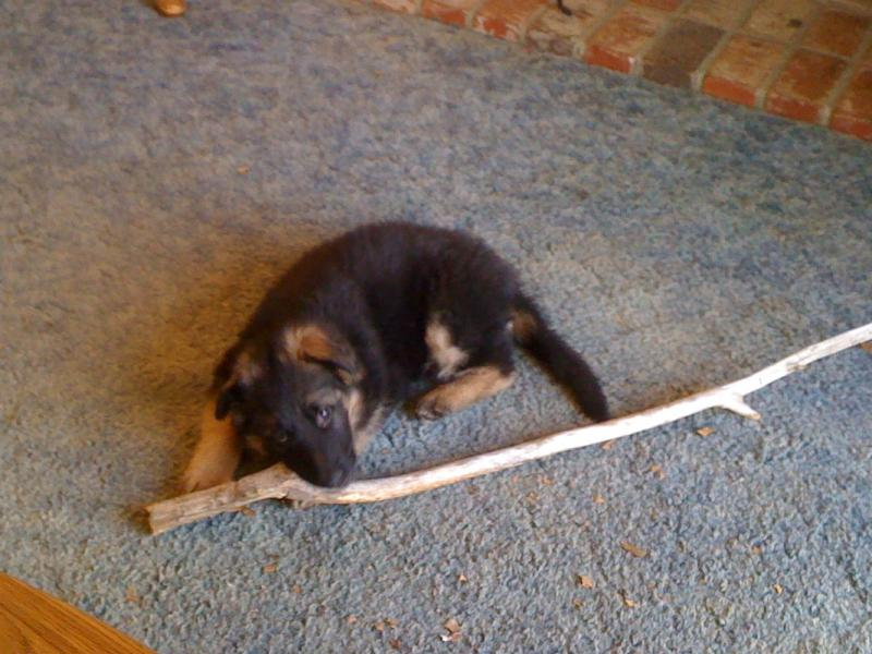 Why the biggest stick in the forest?-096.jpg