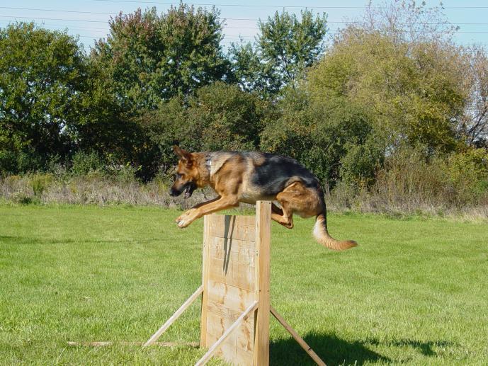 Schutzhund Agility Dog Training Equipment Aurora Il