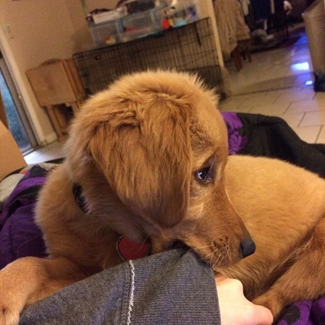 Benny blinded  puppy-1004887_10152078589358491_992303052_n.jpg