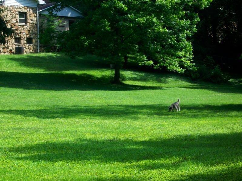 Show me your backyard!-100_0521.jpg