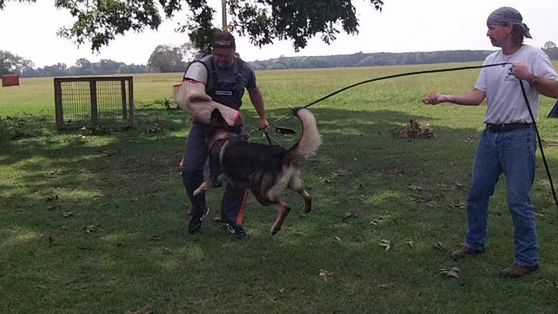 Schutzhund training and cats?-100e0191.jpg