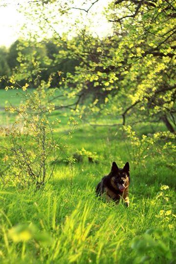 Foster Miss Foxy Roxy!-10372574_10154231855945512_4367694433809185138_n.jpg