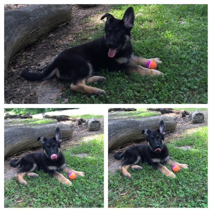 My Puppy Overweight ?-10376198_10202086229019179_5605166503191434841_n.jpg