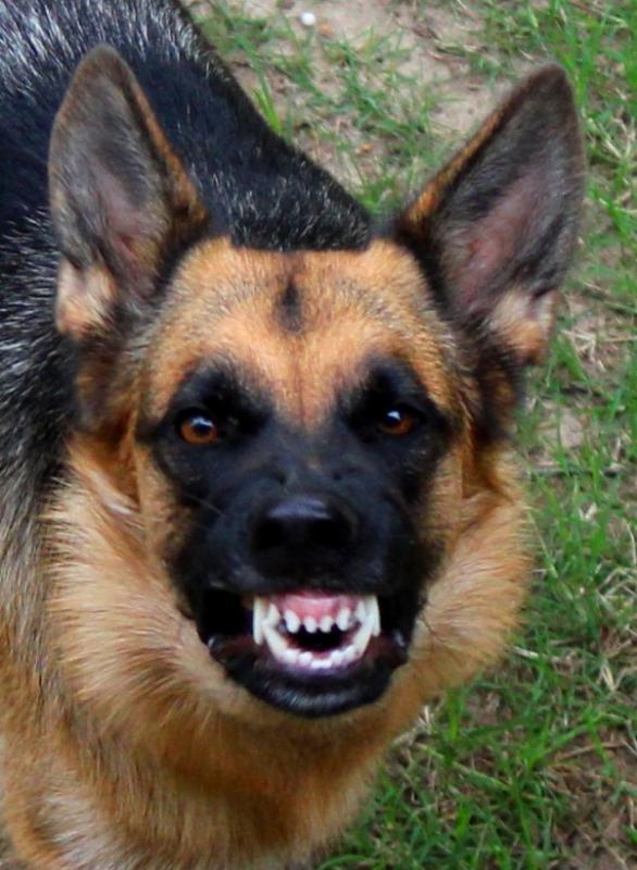 My Pretty Pink Gel Nails: German Shepherd Dog Forums