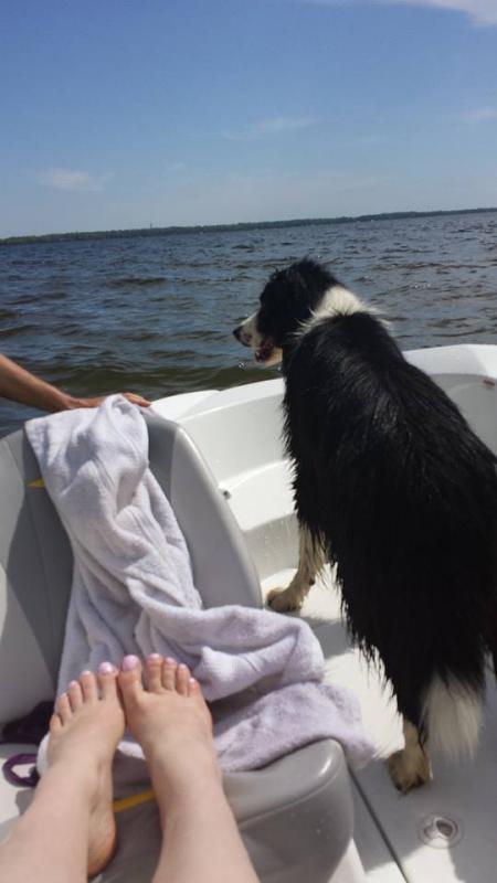 Boat dogs!-10410626_673388366069591_3874487706785563514_n.jpg
