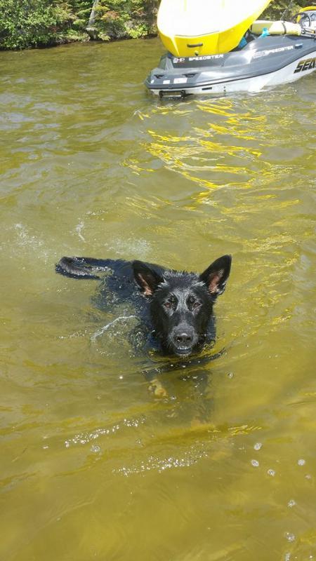 Boat dogs!-10421112_673390352736059_598771127056778514_n.jpg