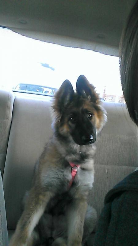 Show me those big eared pups!!!-1364307497795.jpg