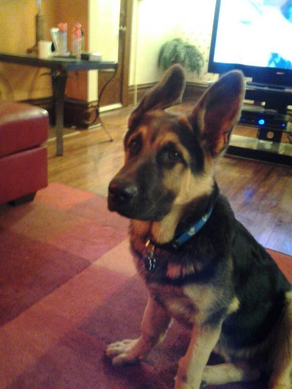 Dog Breeding Chat Room