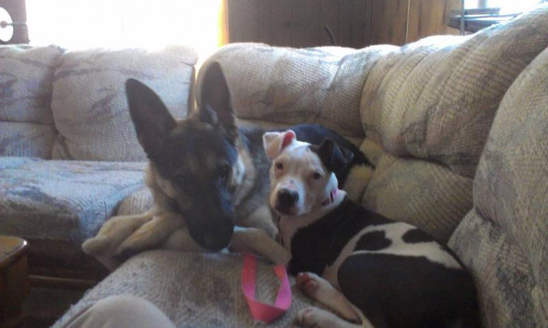 Show us your GSD with their Pack Mates!-1385022438754.jpg