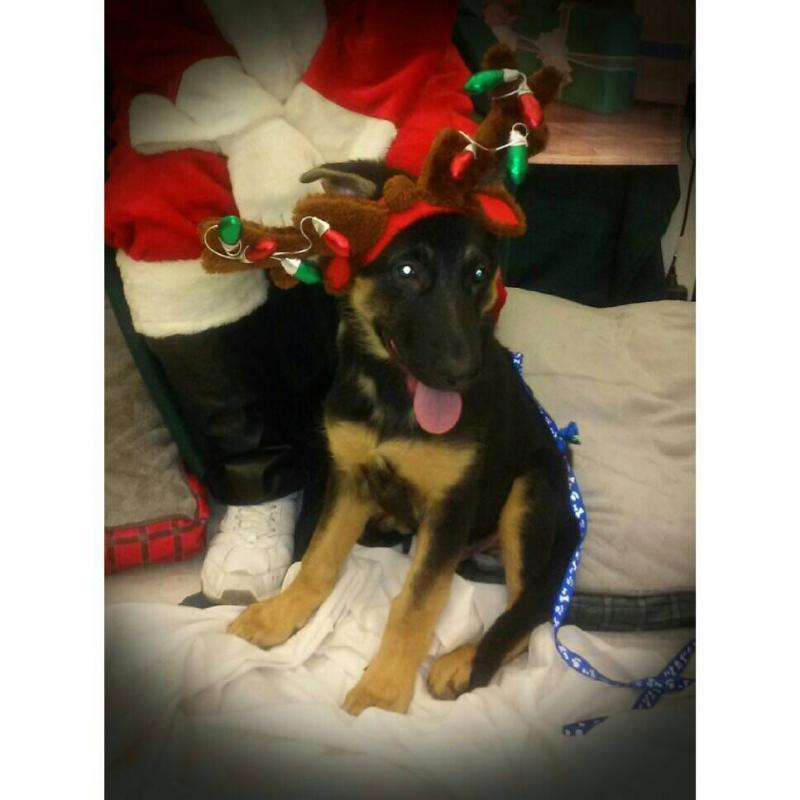 Christmas boy-1386457204074.jpg