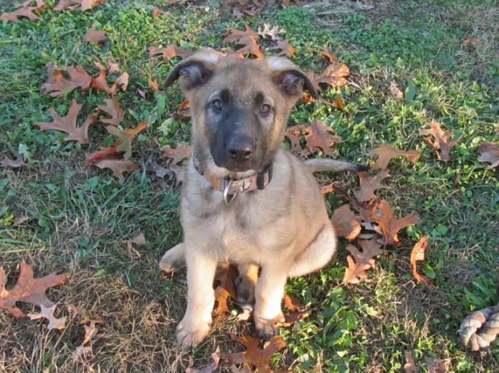 Sam at 15 weeks :)-1387078286263.jpg