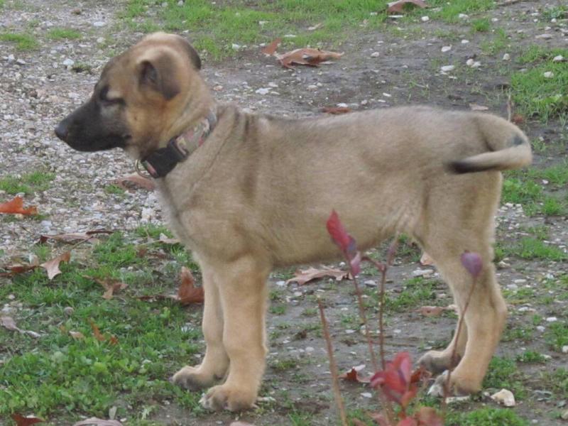 Sam at 15 weeks :)-1387078366554.jpg
