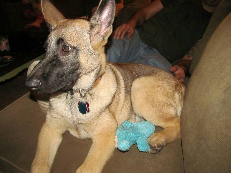 Sam at 15 weeks :)-1387078494587.jpg