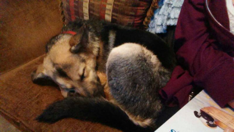 Riley! My 5month old shepherd (:-1387133296898.jpg
