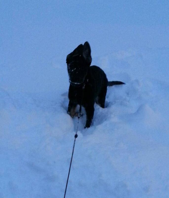 Bella at 15 weeks (almost)-1387935780213.jpg