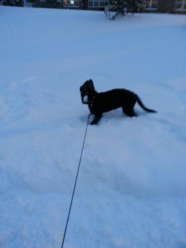 Bella at 15 weeks (almost)-1387935815347.jpg