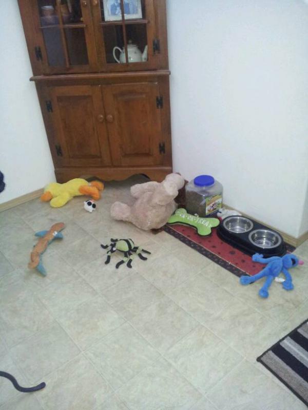 Sorting Toys?!-1388788144381.jpg