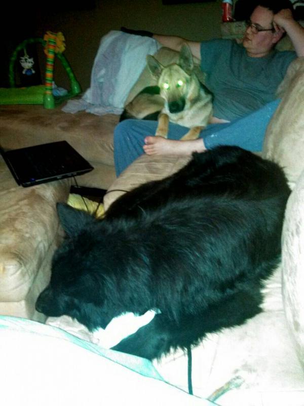 Lap dogs!-1389242559601.jpg