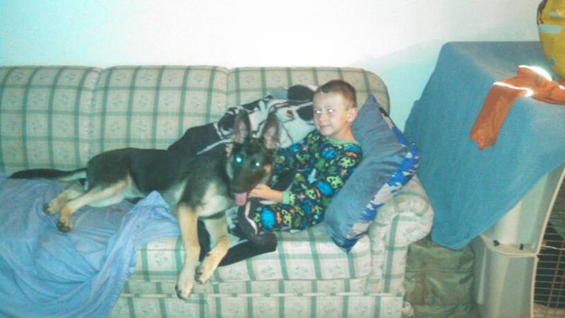 Lap dogs!-1389313543899.jpg