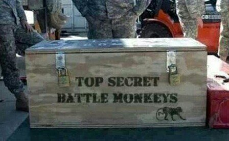 New military handlers needed! Top secret! What has David w. Been doing?-1389723647210.jpg