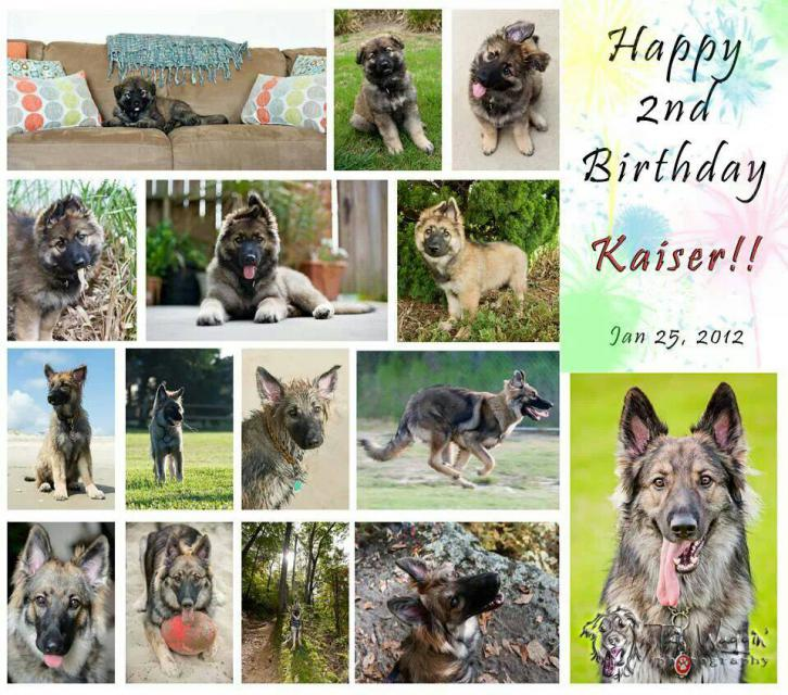 Happy 2nd Birthday Kaiser!!!-1390676834642.jpg