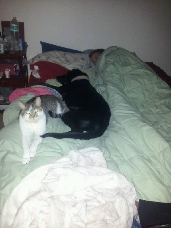 Cat Problem-1391139241454.jpg