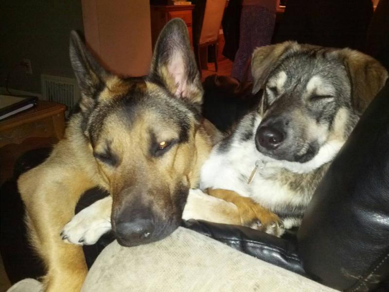 Bandit & Diego.. Best buds..-1391566987073.jpg
