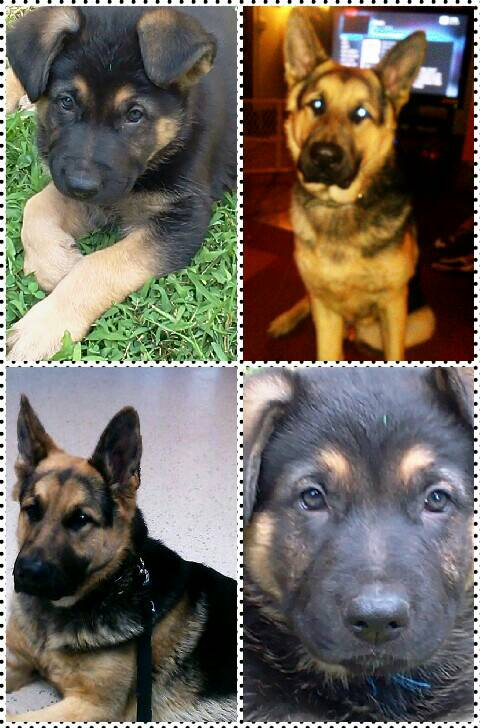 Apollo... 7 weeks to 7 months... what a difference-1391981497179.jpg