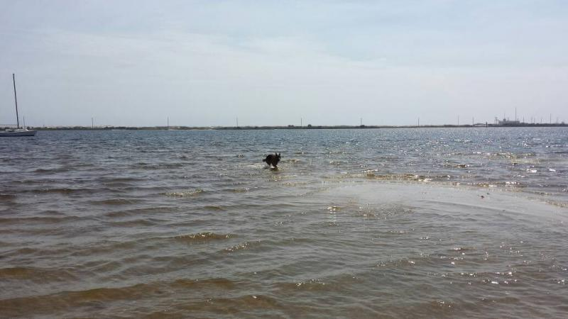 Doggy beach day!-1395540989882.jpg