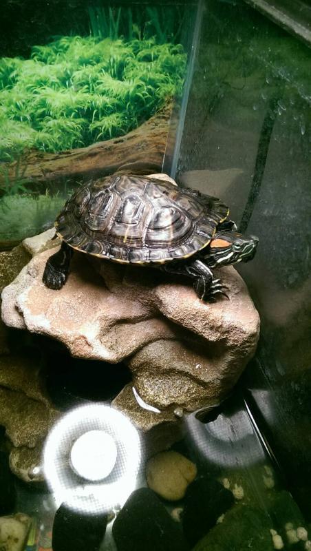 New turtle tank!-1396976233766.jpg