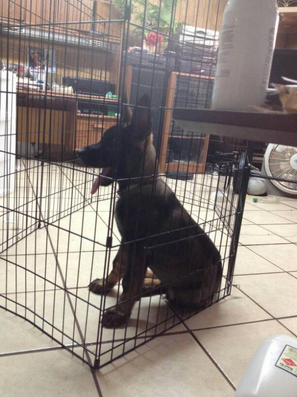 Ugh.. My pup seams to be in time out more often=(-1398709377706.jpg