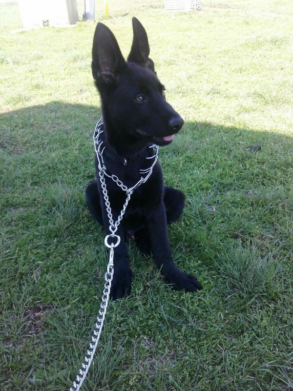 Update!!! Shadow growing fast-1398741657642.jpg