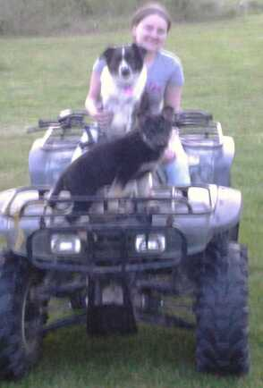 Do Aussie Shepherd Dogs require more physical/mental stimulation than GSDs?-1399420192223.jpg