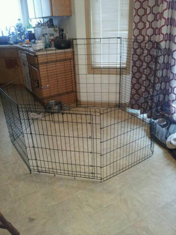 Too small kennel = Awesome habitat!-1399581748365.jpg