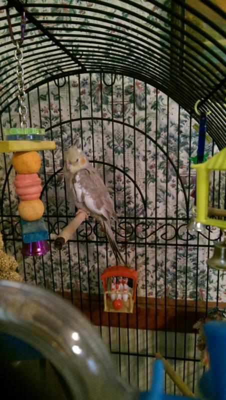 New Bird!!-1401914436066.jpg