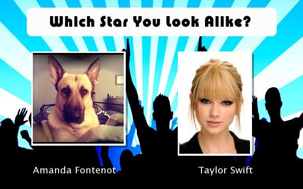 My GSD looks like Taylor Swift-1463240_10201773278276800_1206600022_n.jpg