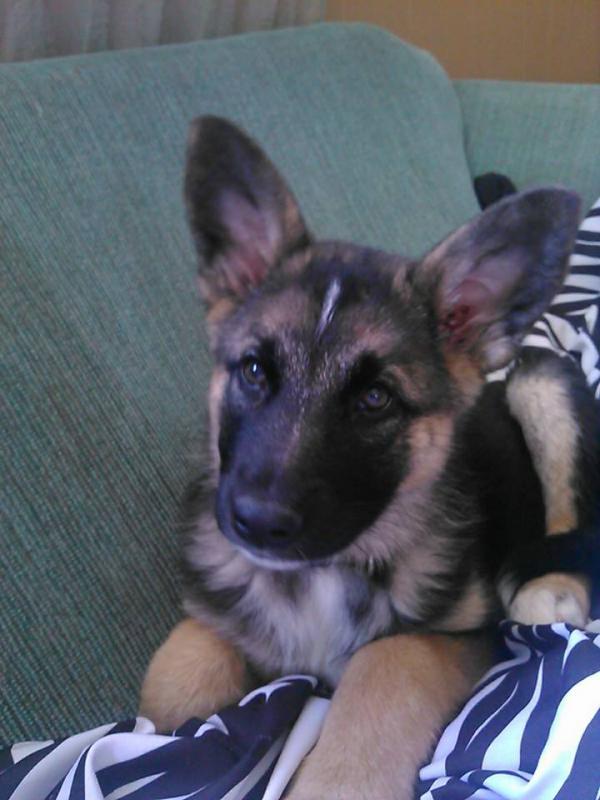 Meet Molly! :)-1510679_1559367707621236_1605535936_n.jpg
