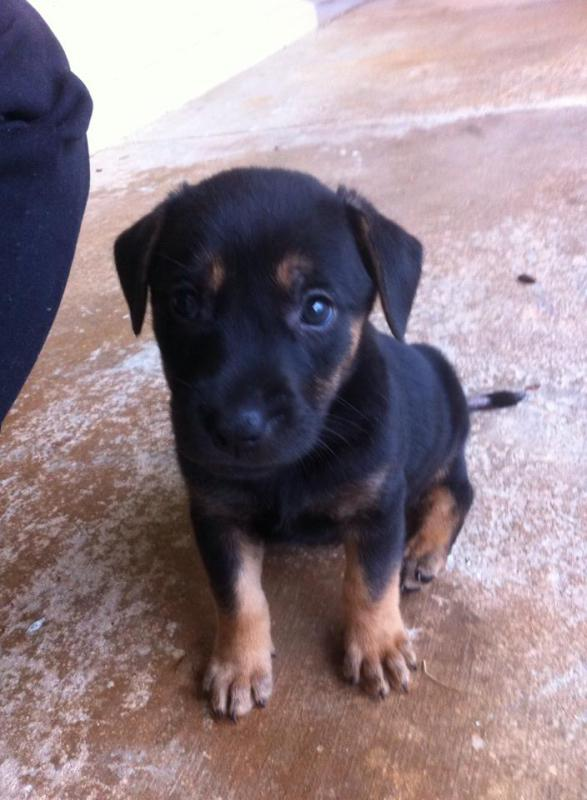 Rescue puppy-1554477_10152136964579477_235730324_n.jpg