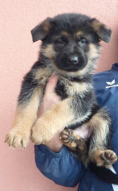 Puppy Arrival!!!-1624568_639976902715222_1271821898_n.jpg
