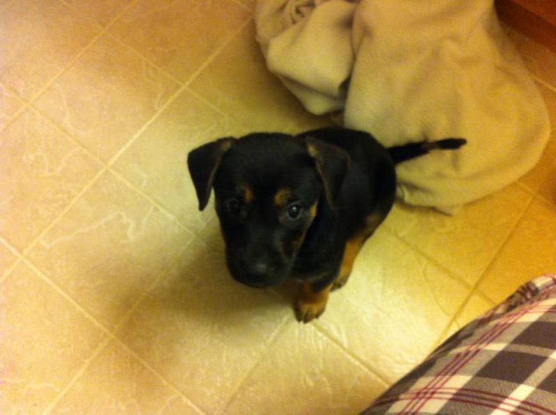 Rescue puppy-1660526_10152151342059477_1153708162_n.jpg