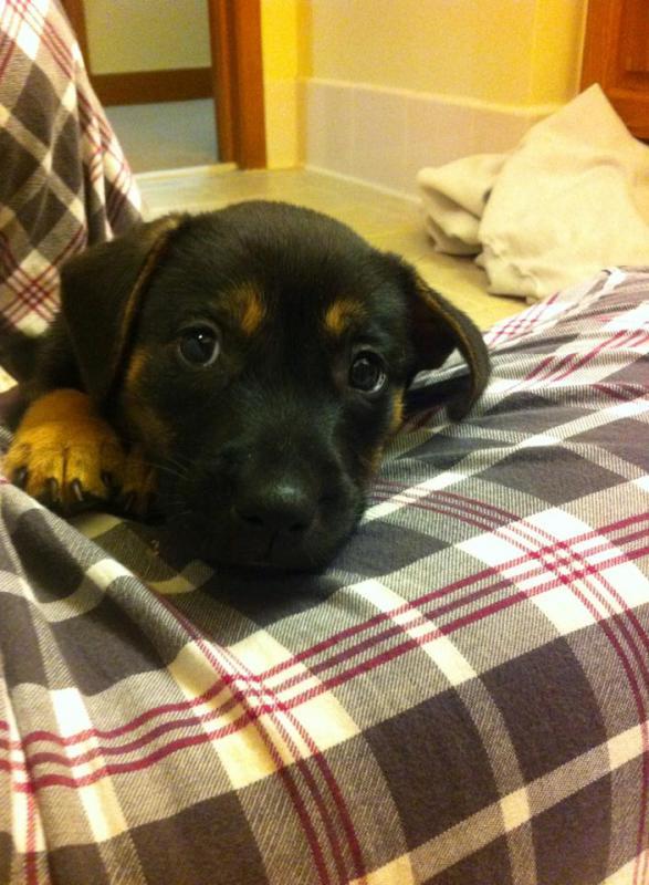 Rescue puppy-1794676_10152151342394477_857333763_n.jpg