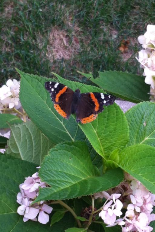 Summertime & Butterflies-182157_10150971828432616_664121614_n.jpg