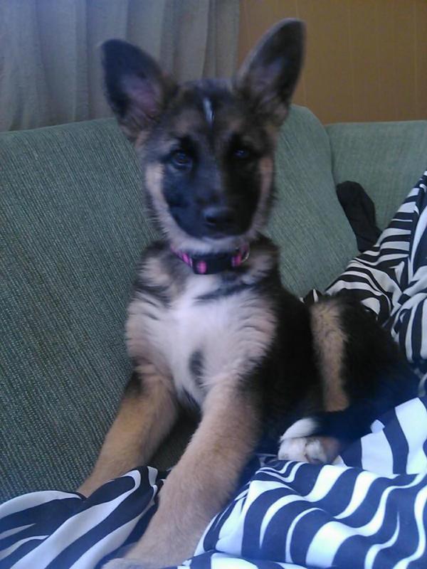 Meet Molly! :)-1900164_1548976395327034_1692943537_n.jpg