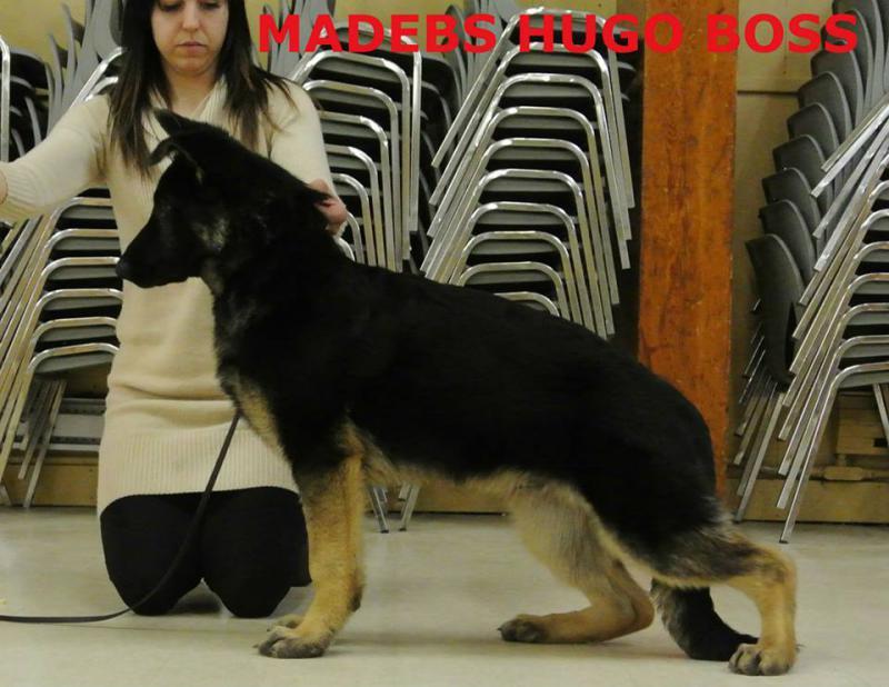 Hugo Boss-1922512_10152032185431229_1469477675_n.jpg