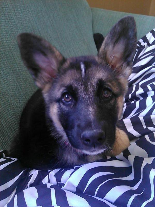 Meet Molly! :)-1964975_1548975241993816_2002301030_n.jpg